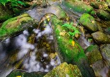 小河温和雨林 库存照片
