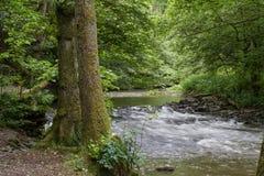 小河漂浮throuh一个绿色森林 库存图片