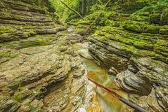 小河用在深黑暗的峡谷的纯净的水 库存图片