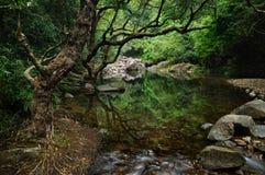 小河的池塘 库存照片