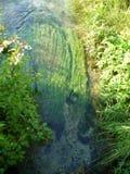小河的水生植物 免版税图库摄影