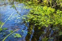 小河的绿色植物 库存照片