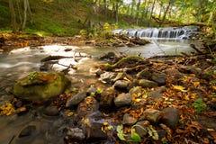 小河级联在森林里 免版税库存照片