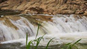 小河落反对岩生植物茎在前景在公园 股票视频
