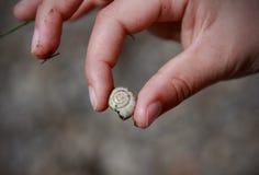 小河蜗牛 免版税库存图片