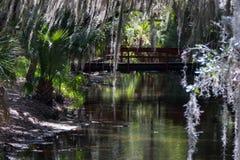 小河视图在Florda 免版税库存照片