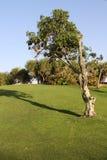 小河迪拜公园 免版税库存图片