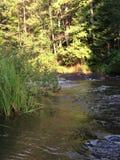 小河通过一个北威斯康辛森林 库存照片