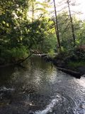小河通过一个北威斯康辛森林 图库摄影