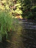 小河通过一个北威斯康辛绿色森林 库存照片