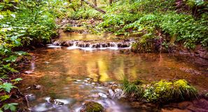 小河通过晴朗的森林 免版税库存照片
