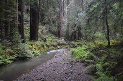 小河通过森林 免版税库存照片