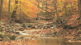 绕小河通过秋天森林 股票视频