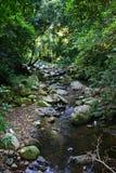 小河雨林 库存图片