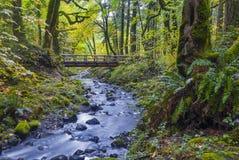 小河风通过有英尺桥梁的一个森林 免版税库存照片