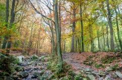 小河,森林秋天, Ardens,瓦隆,比利时 库存图片