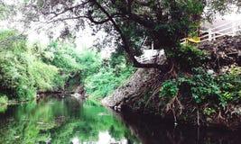小河 库存照片