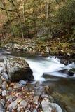 小河rushig通过森林 库存图片
