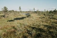 小沼泽河在夏天 Kemeru拉脱维亚 图库摄影