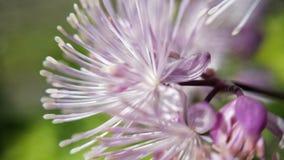 小浅紫色和白色夏天花 库存图片