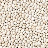 小海军、扁豆、白色豌豆、白色肾脏或者Cannellini Purga 免版税库存图片