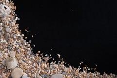 小海石头和壳在左角从,在黑背景,与一个自由空间在文本下,标题,广告 免版税库存图片
