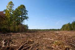 小清楚的森林 免版税图库摄影