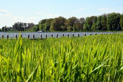 小游艇的一只跳船在Rottemeren,掩藏在很多自然秀丽后 库存照片