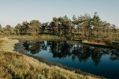 小湖到沼泽里在晚上在夏天 Kemeru拉脱维亚 库存照片