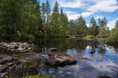 小湖在有反射、荷花和木房子的,挪威森林里 库存照片