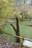 小湖在有海岛和树的庭院里 免版税库存照片