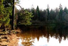 小湖在森林里 图库摄影