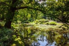小湖的公园 库存图片