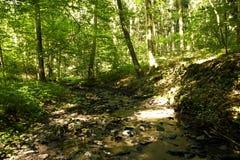 小湾河床在一个豪华的绿色森林里 库存照片