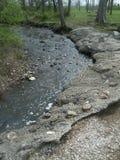 小湾河床在森林 免版税图库摄影