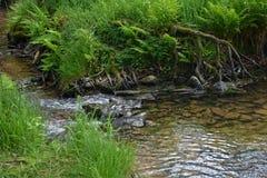 小溪在清早 库存照片