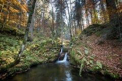 小溪在黑森林,德国里 免版税库存图片