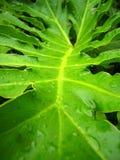 小滴分叉叶子多紫色雨 库存图片