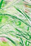 小滴在绿草的雨 库存照片