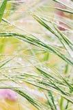 小滴在绿草的雨 免版税库存照片