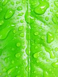小滴绿色叶子水 库存图片