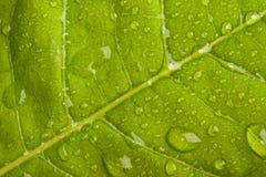 小滴绿色叶子水 免版税库存图片