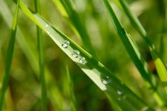 小滴绿色叶子雨 库存图片