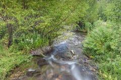 小瀑布反弹国家公园流动的水 免版税库存图片
