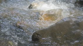 小瀑布和水流动的岩石小河  影视素材
