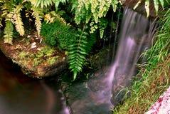 小瀑布和鲤鱼鱼 库存照片