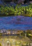 小瀑布在一个后院池塘 库存图片