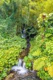 小瀑布在一个热带森林里 免版税库存照片