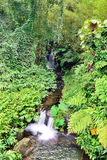 小瀑布在一个热带森林里 库存图片