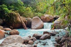 小瀑布在密林 免版税图库摄影